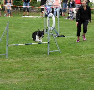 Agility med happy