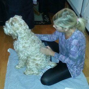 Friskvård hundmassage